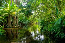 What Could Happen if the Rainforest Disappeared   Reader's Digest